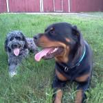 Carlie & Rayna on a break