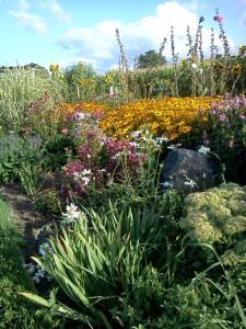 Marys Garden4