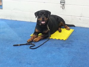 Rayna on her mat